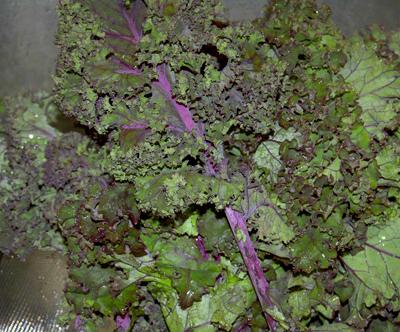 kale, fall greens goodness